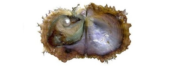 article-10554- section-12898-4